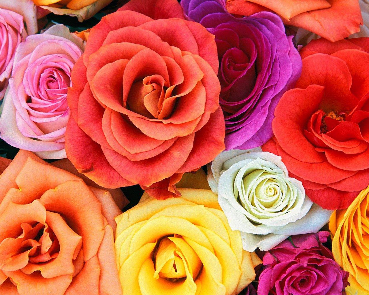 lovebloomsrosesbunchofflowers.jpg